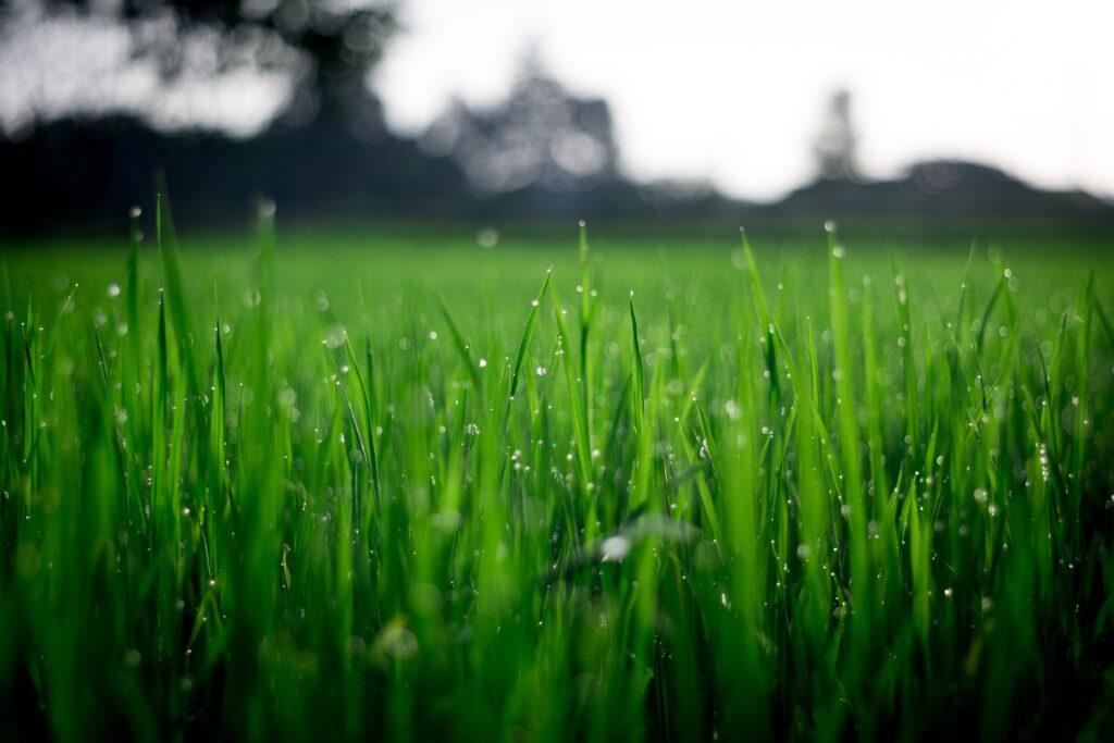 thank you lawn